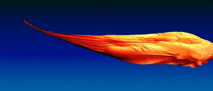 Bynar - Pendulum vs. Swedish House Mafia vs. Kites